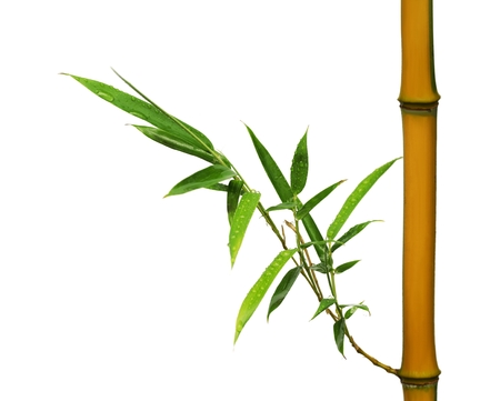 Bamboo with leaf isolated on white background
