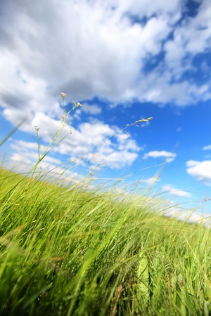 Wild grass and cloudy sky Stock Photo