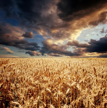 cloudy sky over wheat field Stock Photo