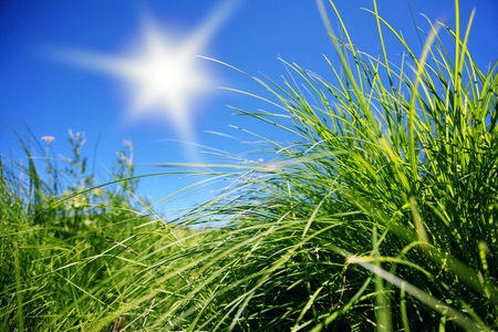 Wild grass with sun Stock Photo