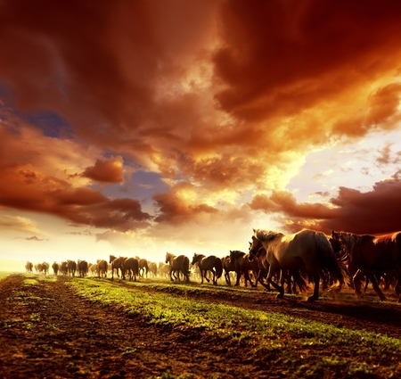 Running wild horses in sunset Stok Fotoğraf