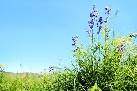 Outdoor wild grass. Stok Fotoğraf