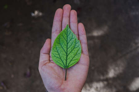 Green tree leaf in a girl's hand. Symbol for ecology. Concept of taking care of the planet Stockfoto