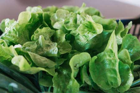 Organic and fresh Lettuce leaves.