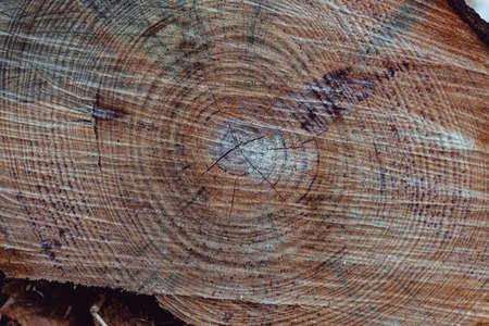 Texture of a tree trunk wood 版權商用圖片