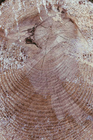 Wooden detailed texture of cut tree trunk. Tree trunk cross-section