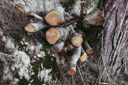 Logs Of Chopped Wood Piled in the forest 版權商用圖片 - 165316219
