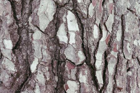Closeup photo of the bark of a pine tree