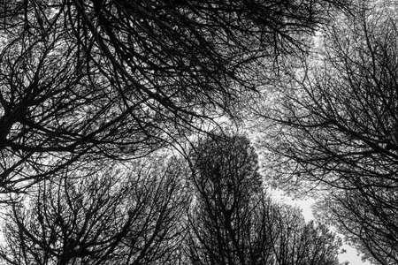 Looking up through the treetops. 版權商用圖片
