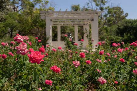 Rose Garden in Palermo Park, Buenos Aires, Argentina.