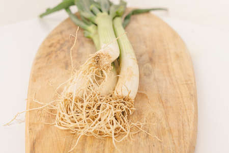 Closeup photo of the roots of organic green onions