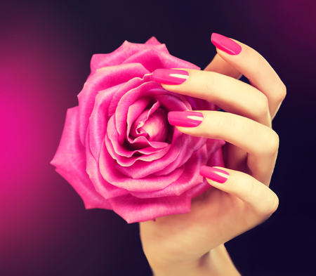 Elegant female hands with pink manicure on the nails . Beautiful fingers holding a rose . Stock Photo
