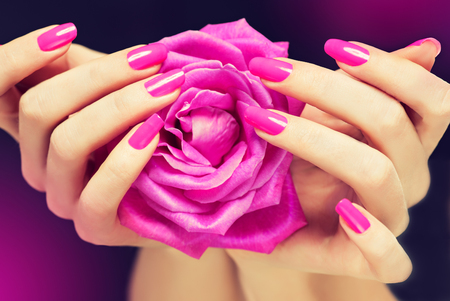 fuchsia flower: Elegant female hands with pink manicure on the nails . Beautiful fingers holding a rose . Stock Photo