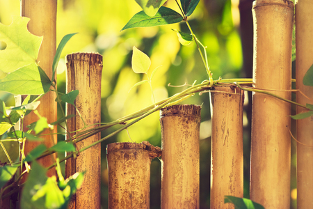 zen interior: Bamboo fence with plants .Green plants on a bamboo wall . Stock Photo