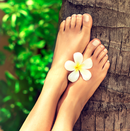 Tanned, well-groomed feet  with flower of frangipani in between, lay on palm trunk.Pedicure, foot care and Spa. Stock Photo