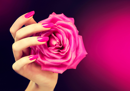 Elegant female hand with pink manicure on the nails . Beautiful fingers holding a rose. Stock Photo