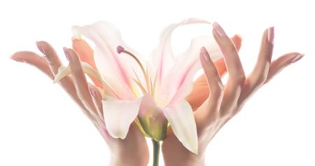 Imagen de primer plano de las manos de mujer hermosa con manicura rosa claro en las uñas que sostiene una flor de lirio. Crema para manos y tratamiento de belleza. Delicada flor de lirio en manos elegantes y elegantes con dedos delgados y elegantes. Foto de archivo