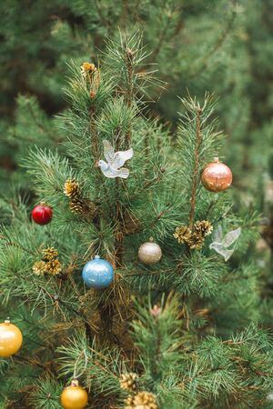 Colorful Christmas balls on fir tree in forest background. Decorated Christmas tree outdoor background Stok Fotoğraf