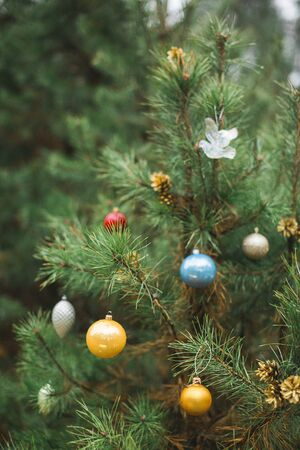 Christmas tree toys on a natural branch with pine tree needles on the winter background in forest. Concept of Christmas, New Year and winter Xmas holidays, background, texture. Stok Fotoğraf