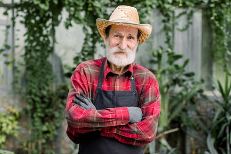 Portrait of senior handsome bearded man gardener in straw hat and checkered shirt with apron, looking at camera with smile and crossed arms, posing in beautiful orangery or hothouse