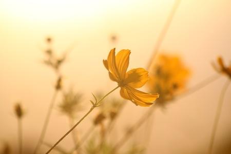 Flowers in sun glow Stock Photo