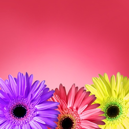 Flowers on pink background Stock Photo