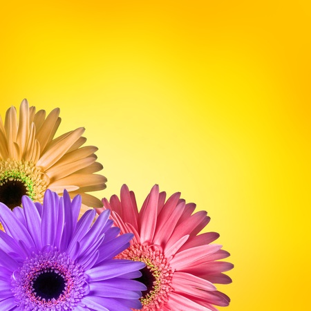 Flowers on yellow background Stock Photo