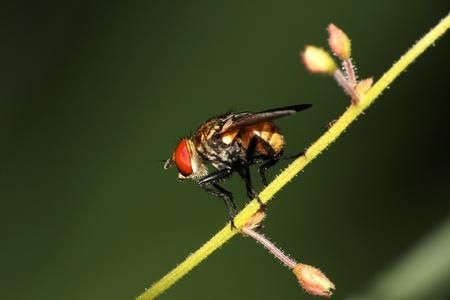 Macro image of fly Stock Photo