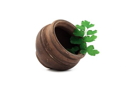 earthenware pot with green leaf on white background. Stock Photo