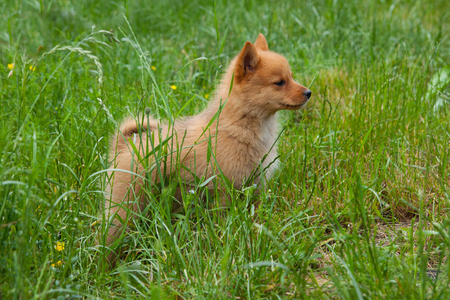 Puppy on the grass