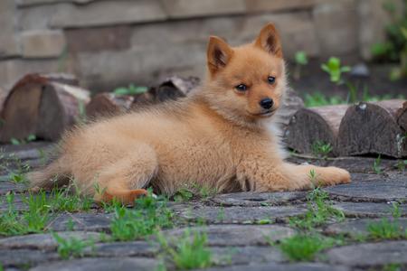 Puppy on the grass and stumps Фото со стока
