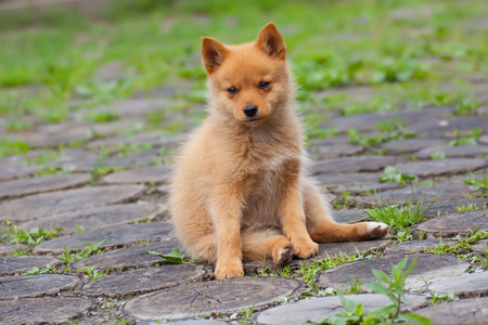 Sitting puppy on the grass