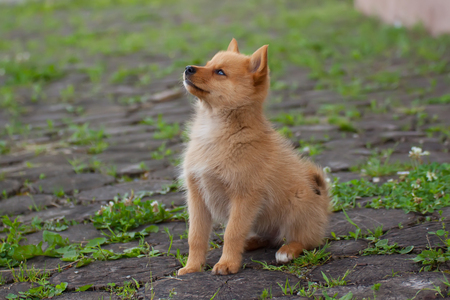 obedient: Obedient puppy on the grass Stock Photo