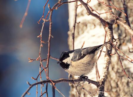 eats: The bird on the branch eats bread Stock Photo