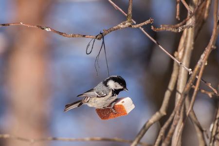 The bird eats