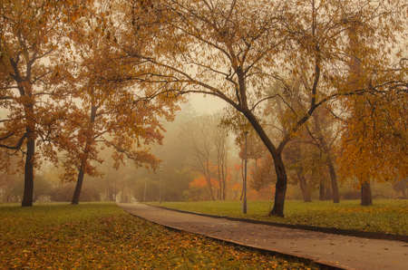 a park in the fog and autumn trees.