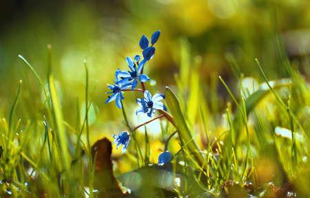 blue wild flower in the grass.