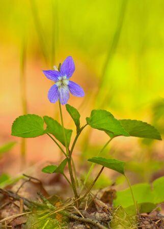 small purple flower: small purple  flower in the grass