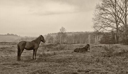 yegua: dos caballos, yegua y potro que miente en el prado Foto de archivo