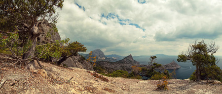 panorama, horizontal view of bay, Crimean mountains with rocky coastline, Black sea. Pine in the foreground