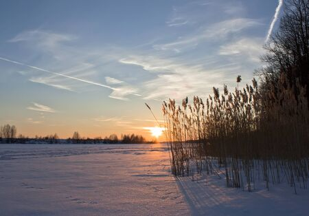 Landscape.sunrise,frozen lake, reeds in the morning mist.
