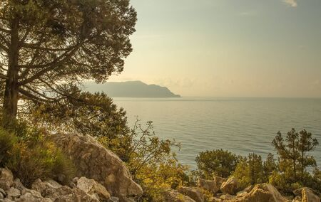 panorama, horizontal view of bay, white clouds, Crimean mountains with rocky coastline, Black sea. Pine in the foreground