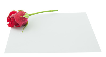 Blank, greeting card, empty white card, valentine. little red rose and pen. Isolated white background Фото со стока