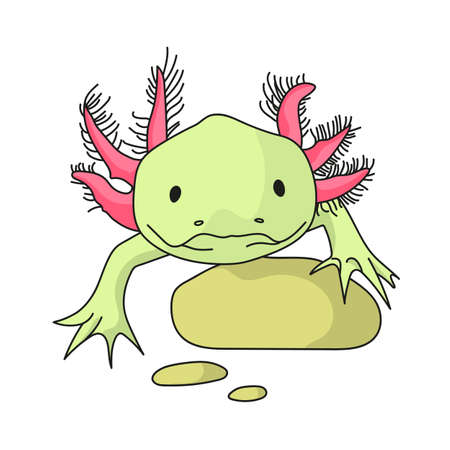 Mexican axolotl isolated on white background. Mexico country stock symbol. Vector illustration Ilustração