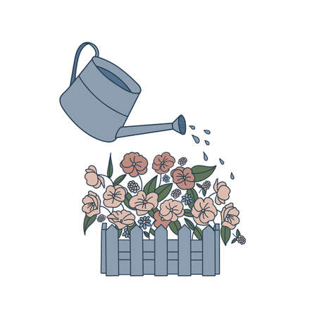 Garden flowers in a box isolated on white background. Watering flowers from a watering can