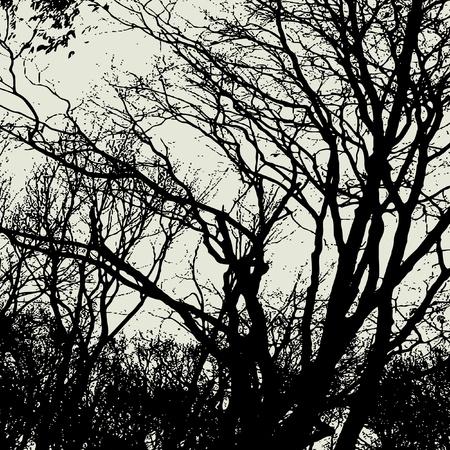 art trees background  photo