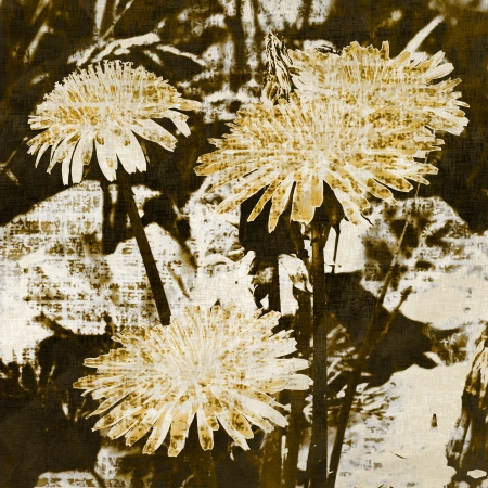 art grunge floral vintage background  photo