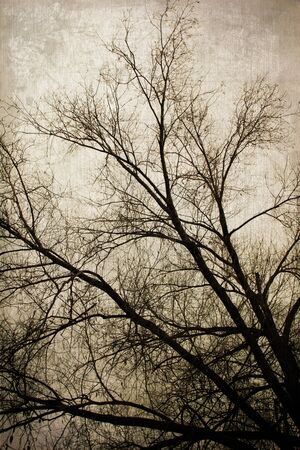 art grunge forest background with sky and empty trees crown Stock Photo - 21169596