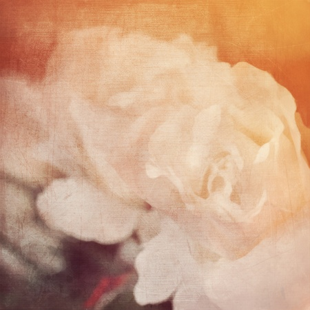 art floral vintage background with white roses in sepia photo