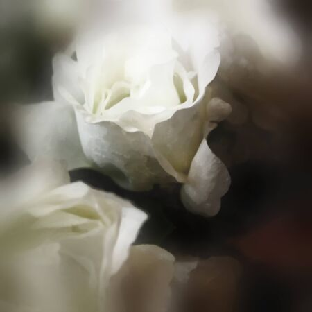 art floral watercolor background with white roses in blur photo
